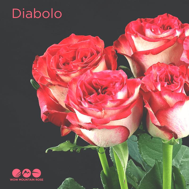 Wow Mountain Roses Diabolo