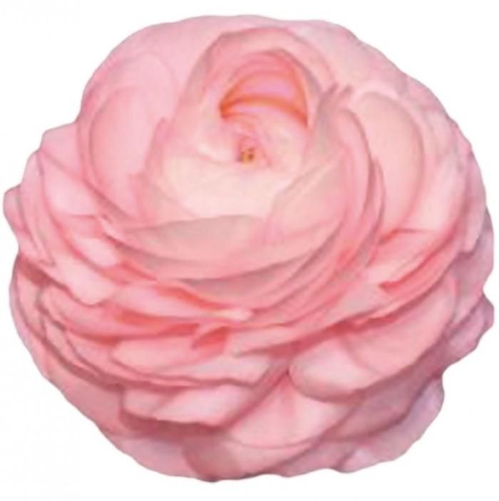 Elegance Pink