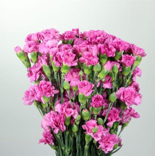 Spray - Lilac Melissa