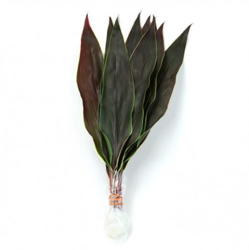 Cordyline Cappuccino Leaves