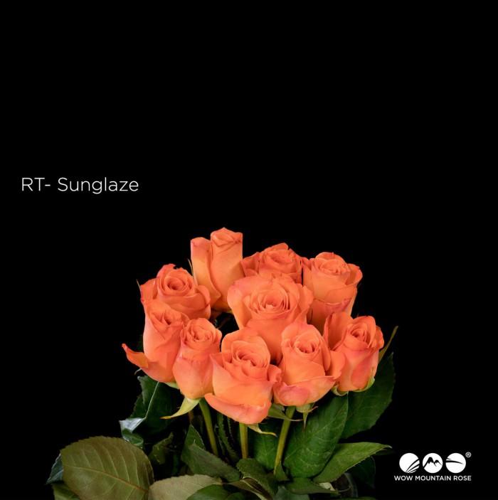 Sunglaze