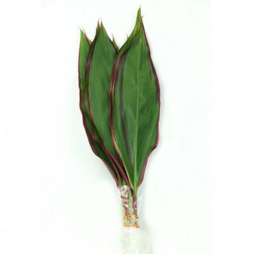 Cord. Lemon Red Edge Leaves