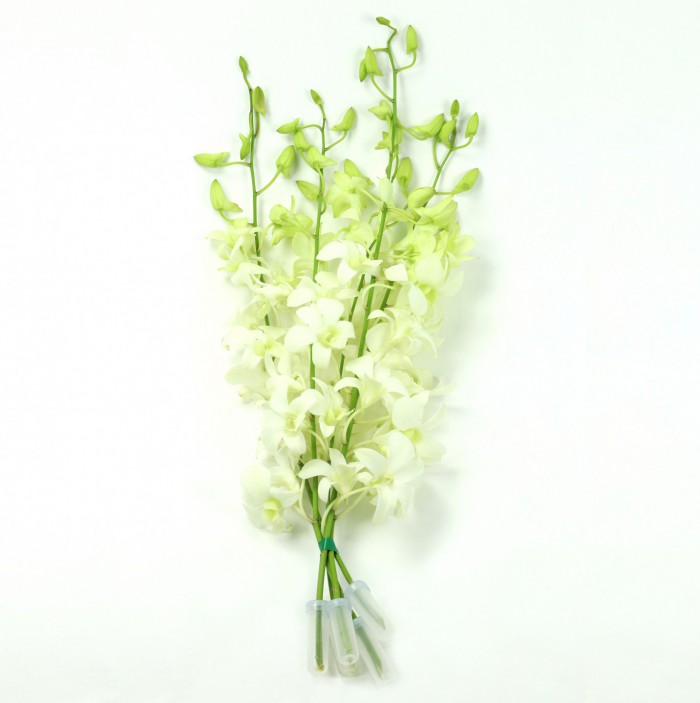 Bouquet 5 Stem White
