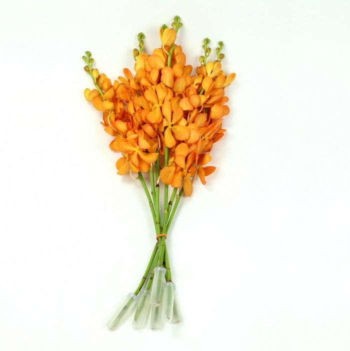Mokara Bright Orange