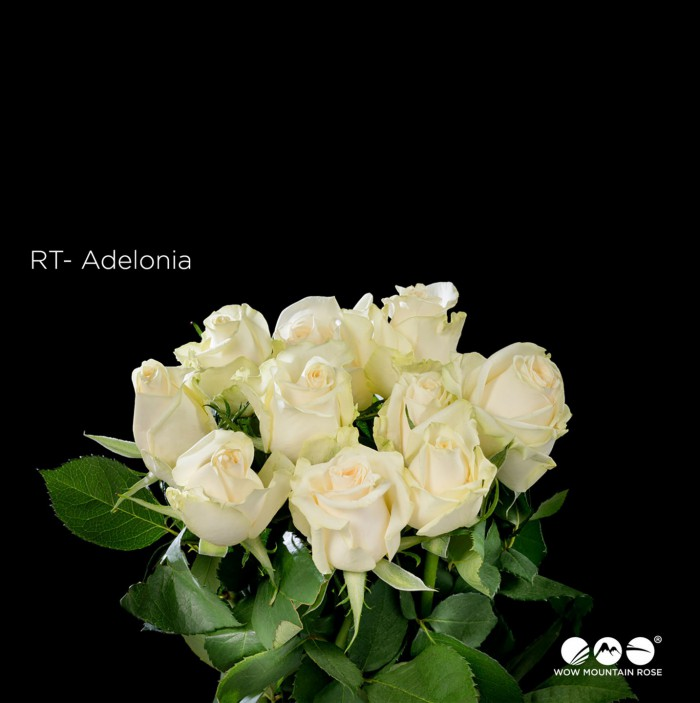 Adelonia