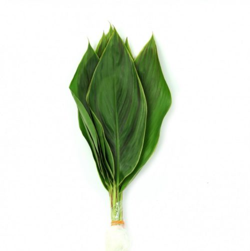 Cordyline Hawaii Flag Leaves
