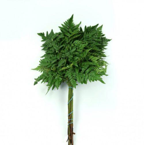 Leather Leaf Uau Tak