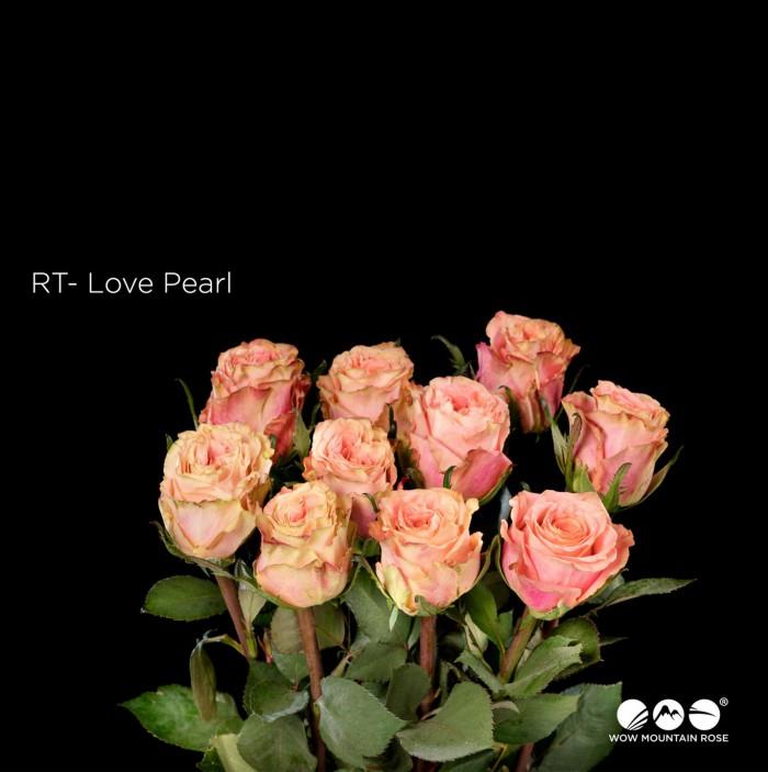 Love Pearl
