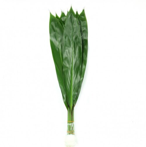 Cordyline Green Tea Leaves