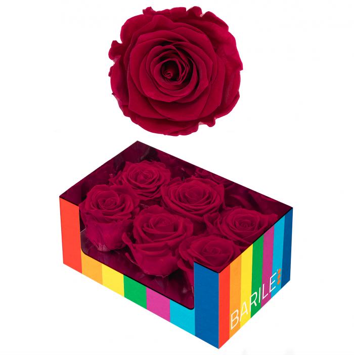 Amaranto Rose