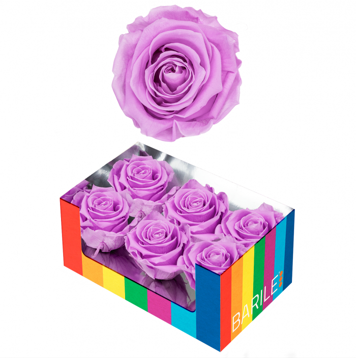 Romantic Lilac