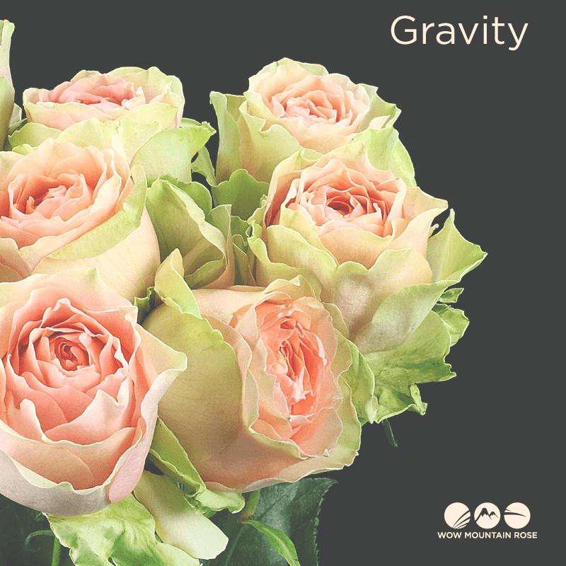 Wow Mountain Roses Gravity